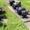 Мосты автомобиля Краз 255 (болотоход) средний и задний #1665969