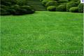 Газонні трави тонконіг,  мітлиця