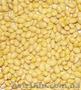 Очистка, протруювання та калібрування насіння сої, Объявление #1253641