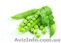 Продам насіння овочевого гороху