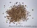 Куплю насіння люцерни для власних потреб