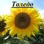 фірма «ГРАН» пропонує  насіння соняшнику «Толедо»  під гранстар